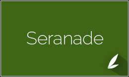Seranade - Beautiful Weebly Theme